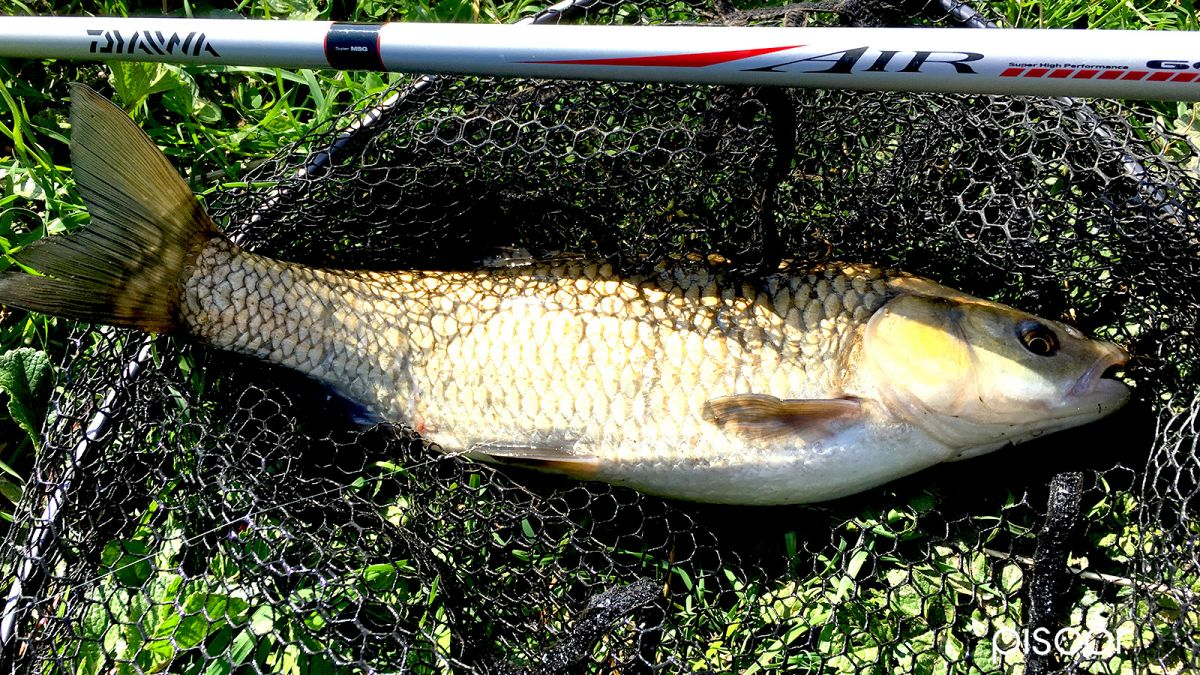 Pesca alla Passata 6