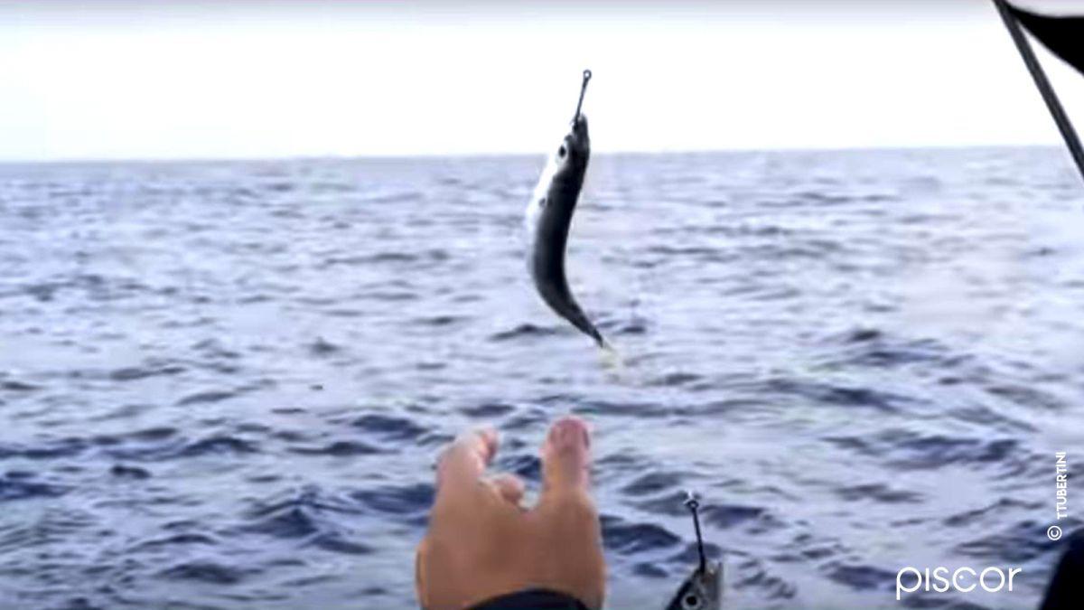 Pesca alla Ricciola 3
