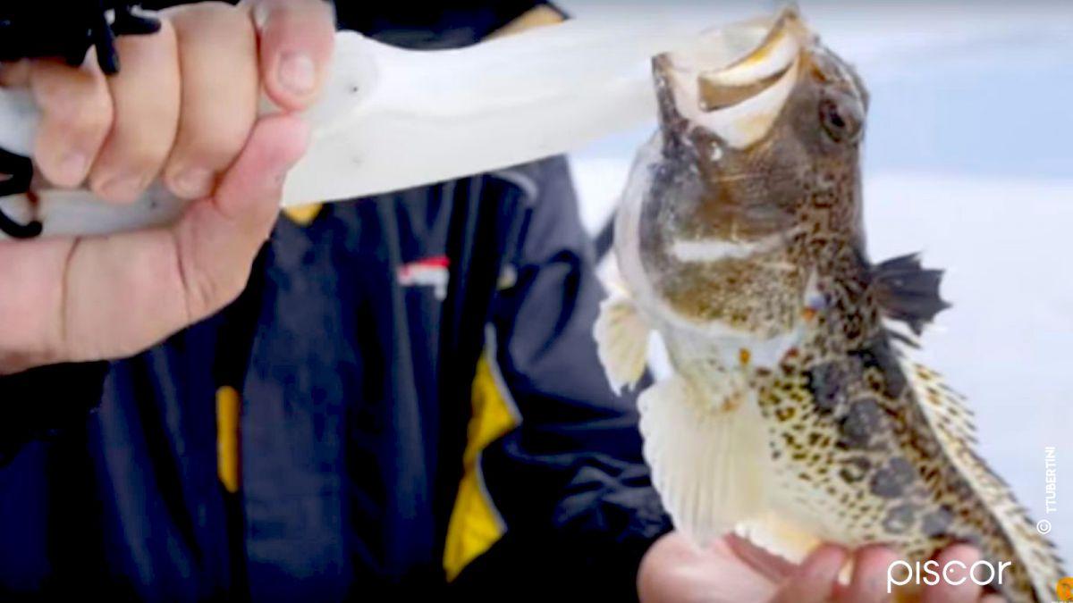 Pesca alla Ricciola 5
