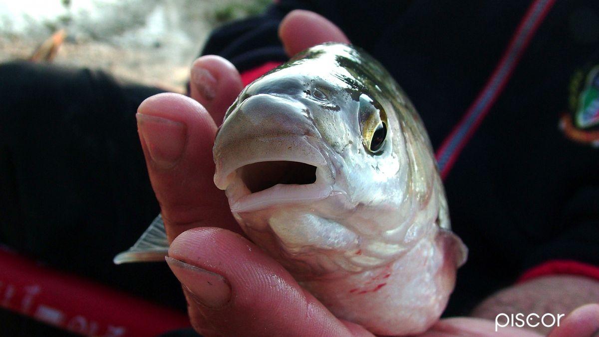 pesca alla savetta 2