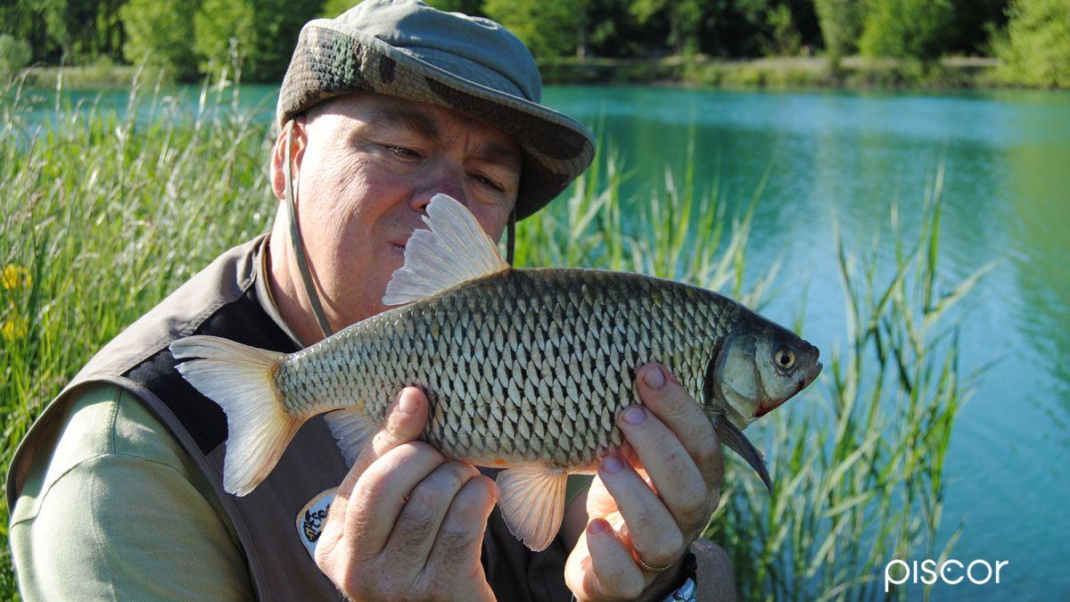 Pesca alla Scardola 1