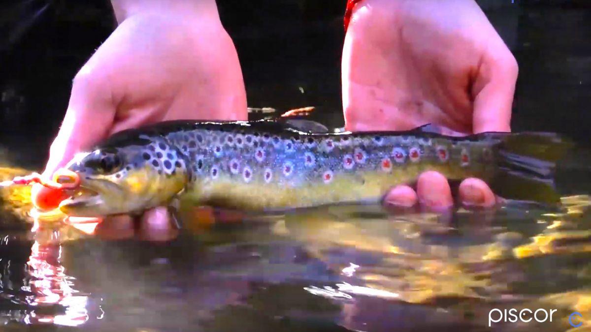 Pesca alla Trota in Torrente 4