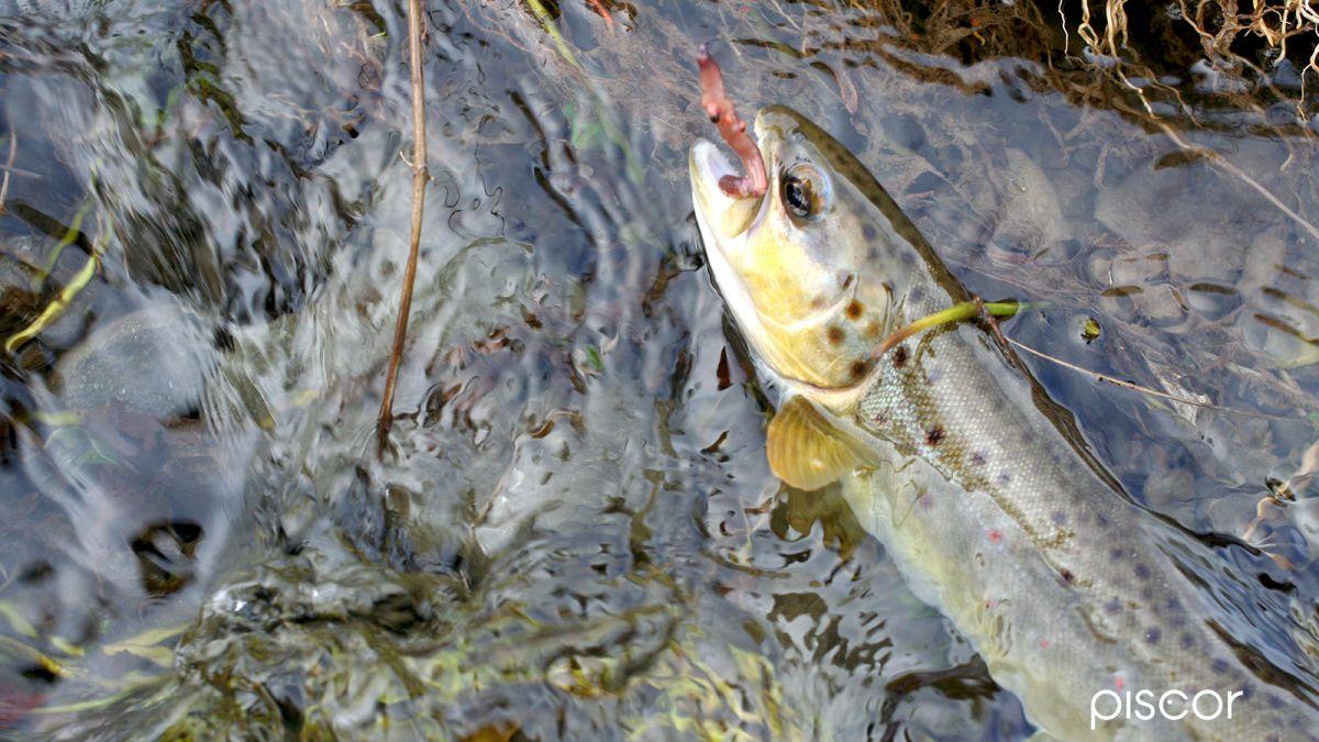 Pesca alla Trota in Torrente 6