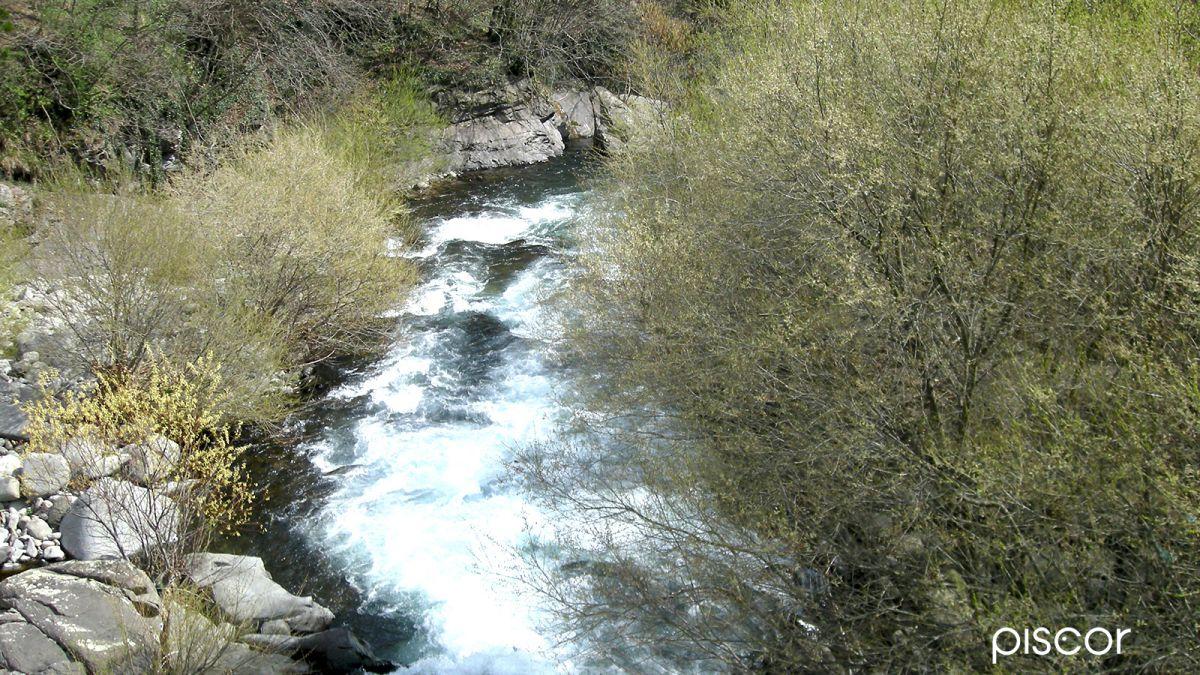 Pesca alla Trota in Torrente 7