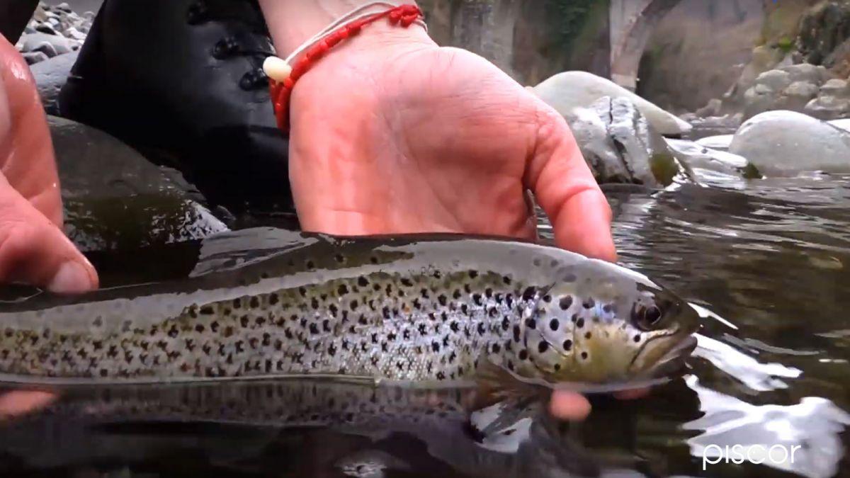 Pesca Alla Trota Selvatica 5