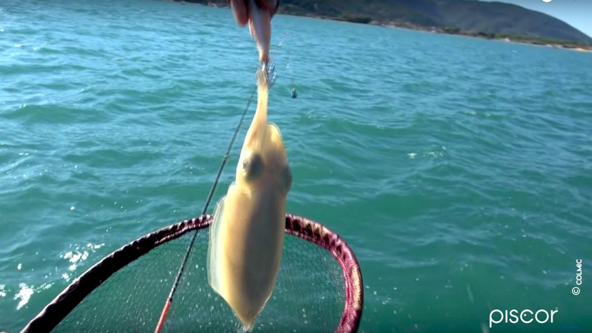 Pesca alle Seppie dalla Barca 7