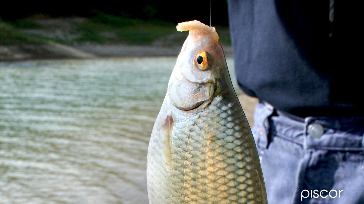 Pesca Colpo - Pasturazione 5