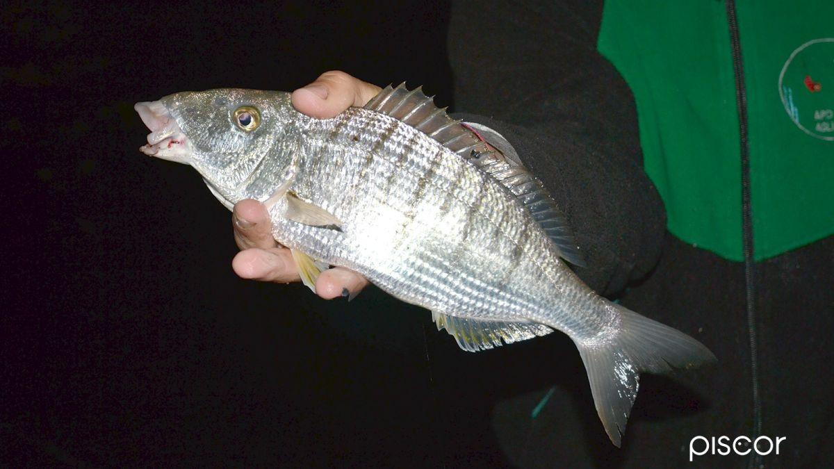 Pesca con la Roubaisienne 1