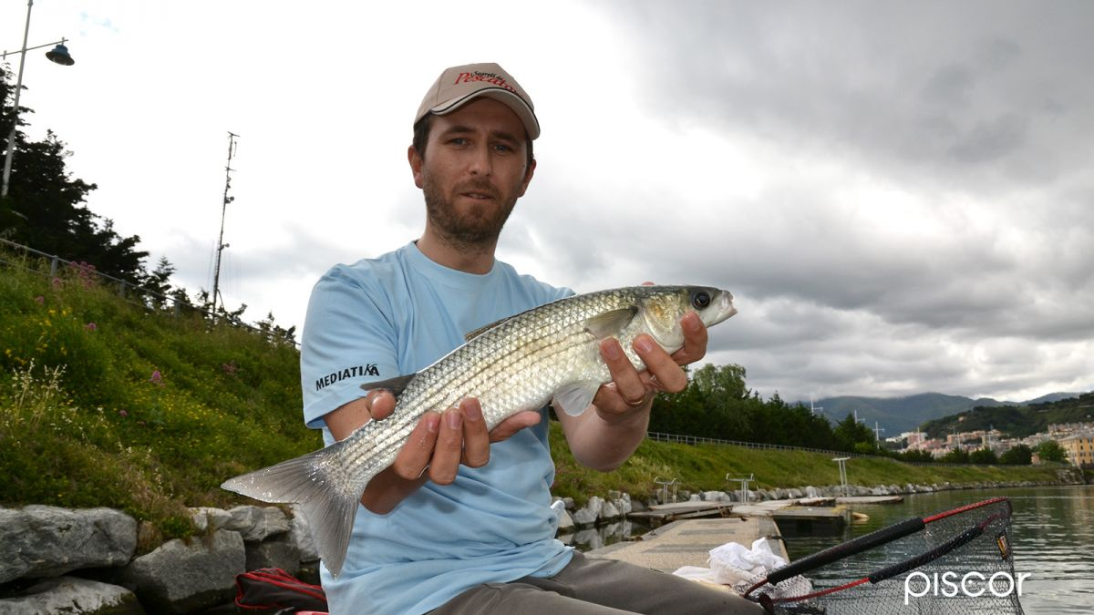 Pesca con la Roubaisienne 3
