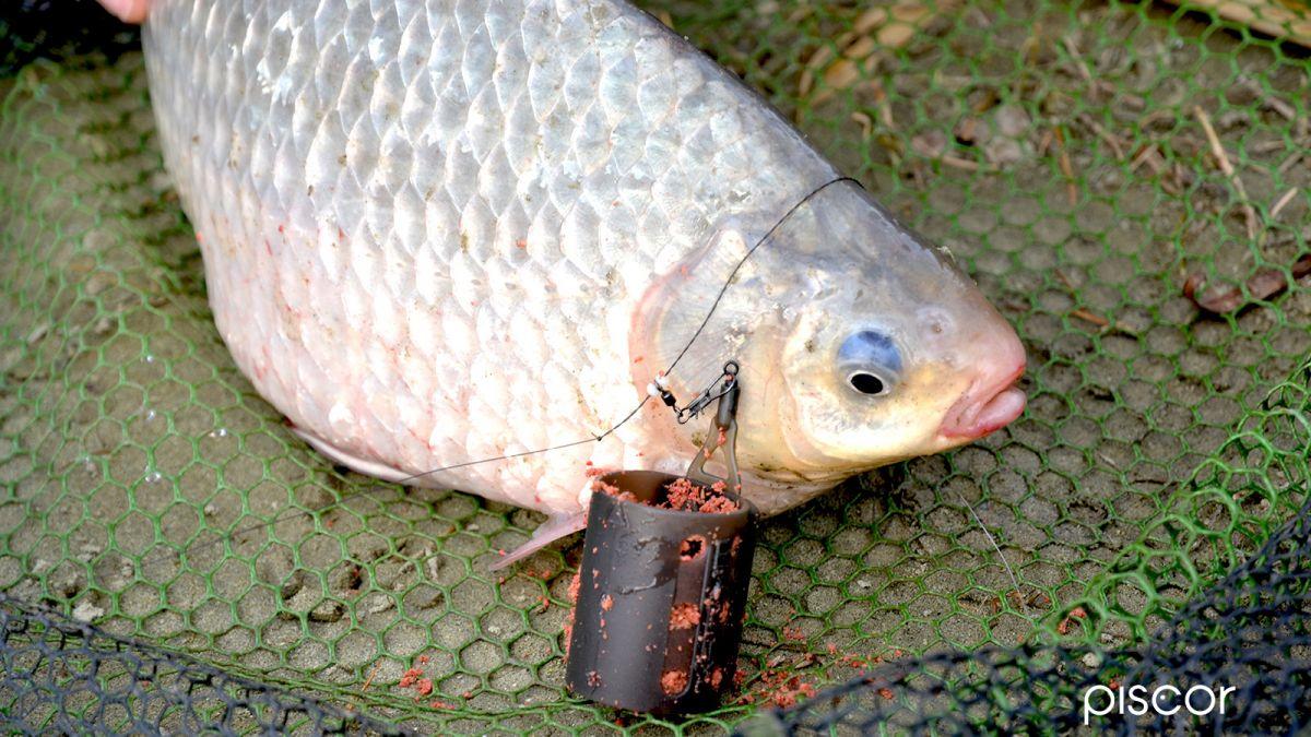 Pesca con Pasturatore 4