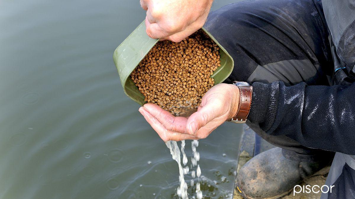 Pesca con Pellet 4