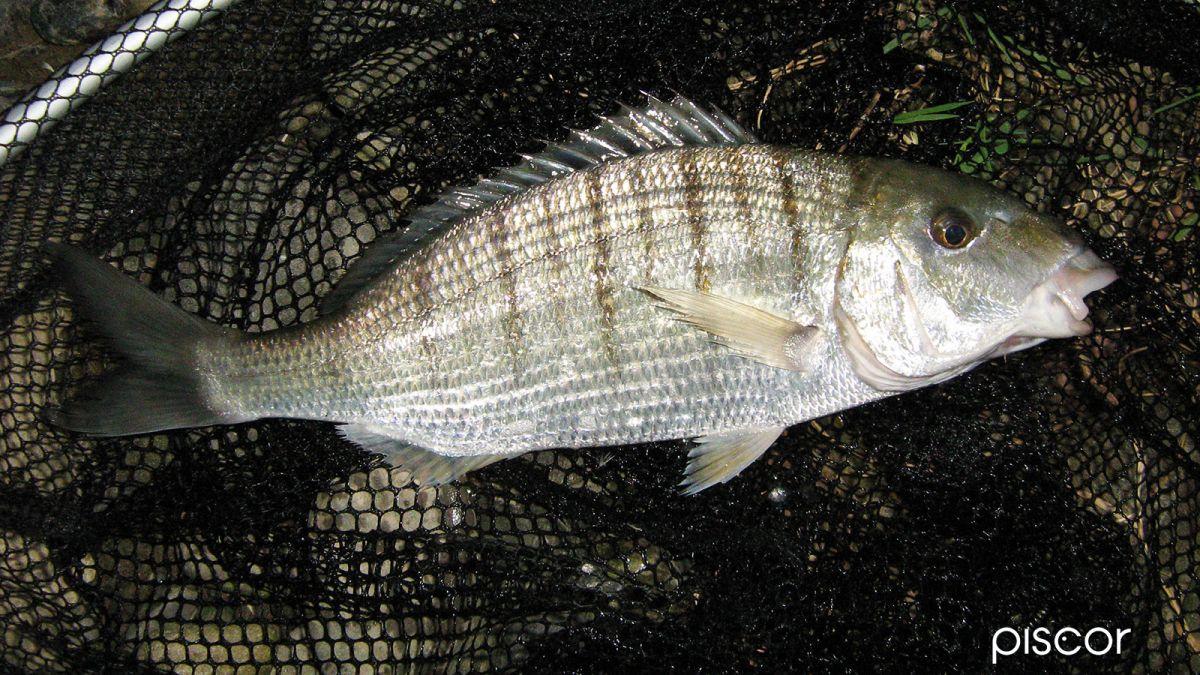 pesca da riva 6