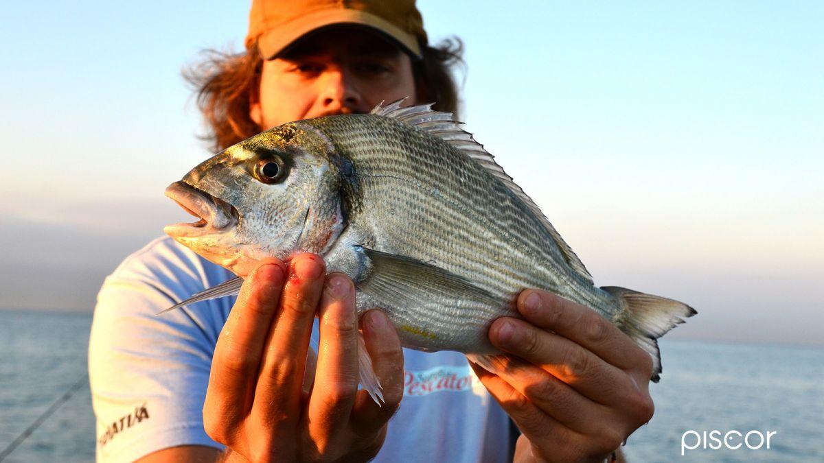 Pesca da Terra 1