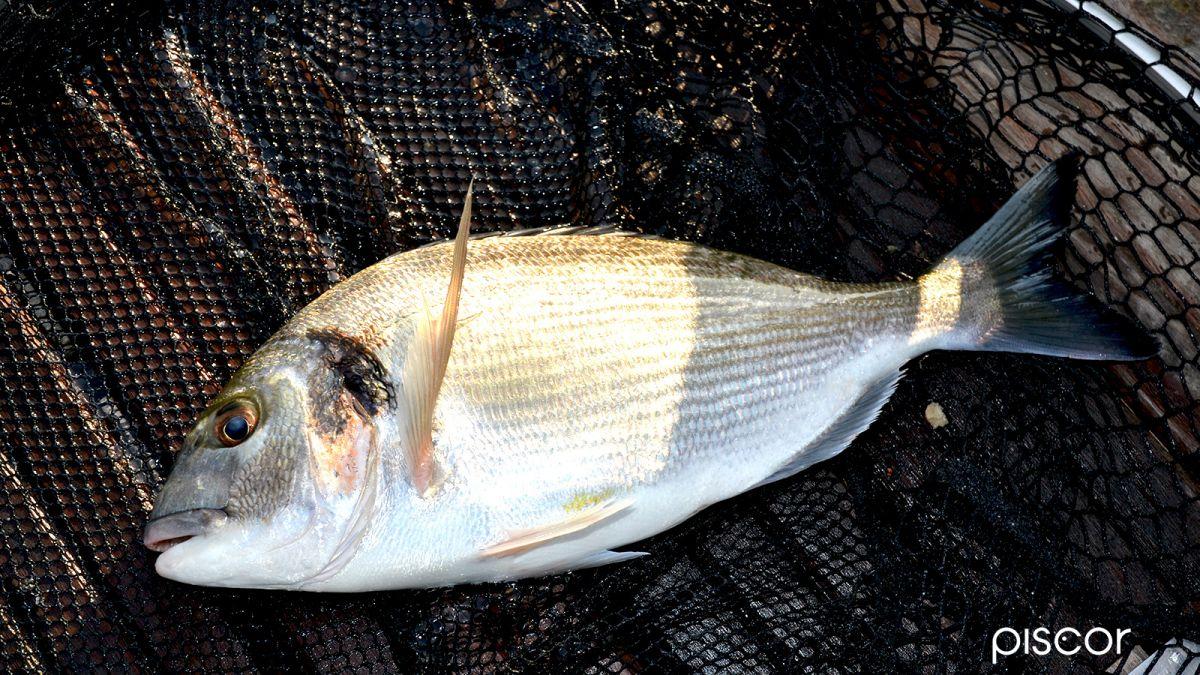 Pesca da Terra 4