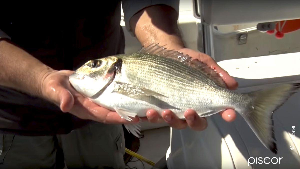 Pesca dalla Barca 1
