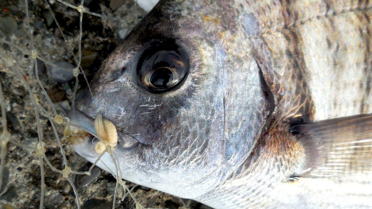 Pesca dalla Scogliera 0