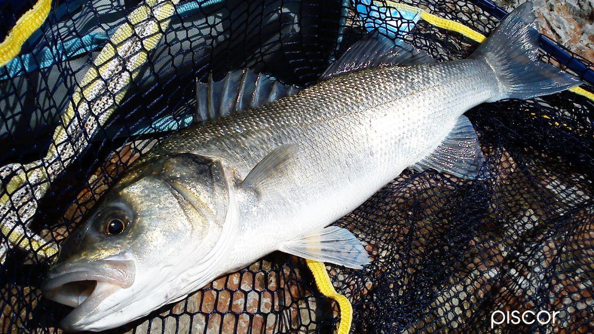 Pesca dalla Scogliera 2