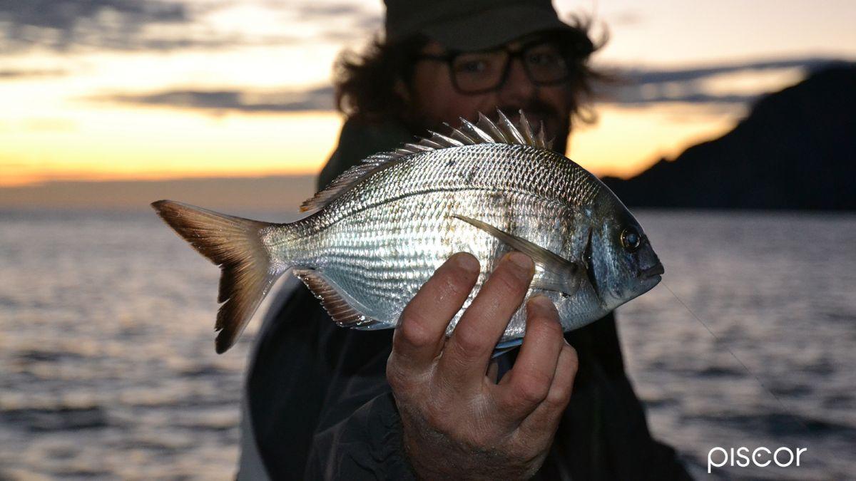 Pesca dalla Scogliera 6