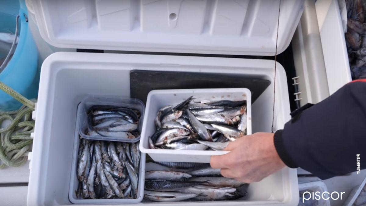 Pesca Dello Scorfano 3