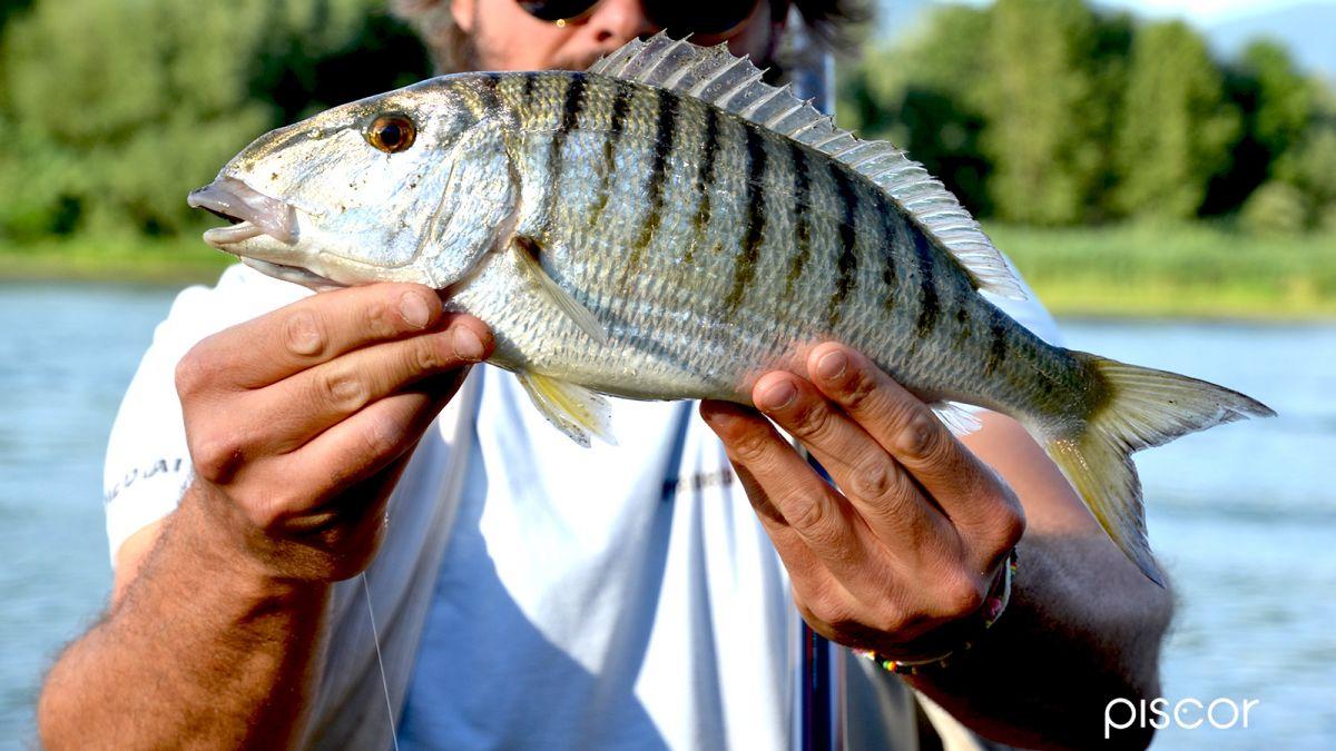 Pesca in Foce 1