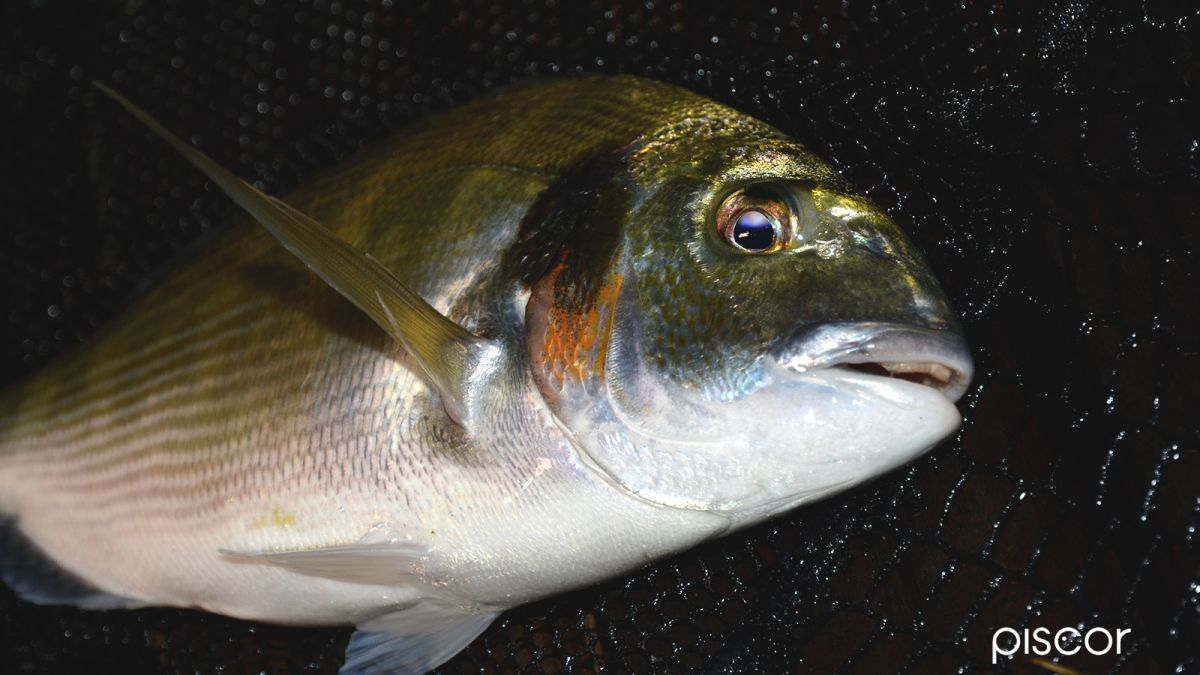 Pesca in Mare da Riva 8