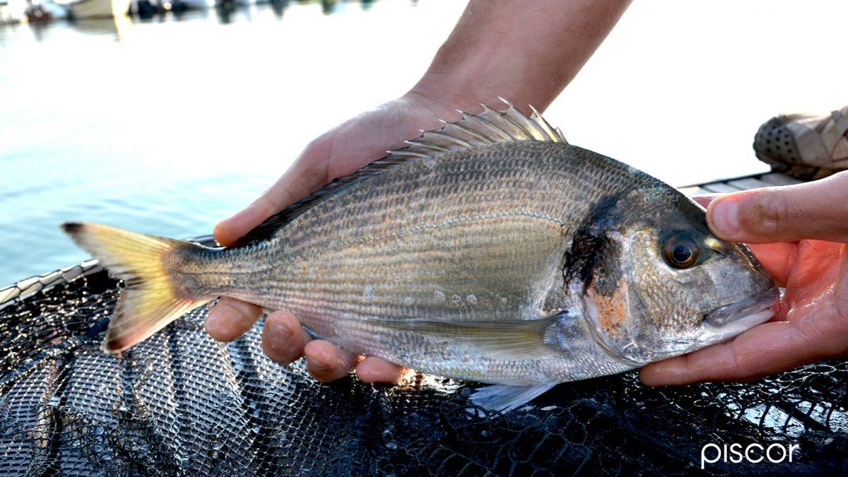 Pesca in Mare da Terra 3