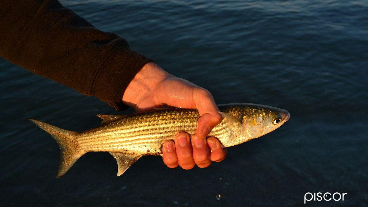 Pesca in Mare da Terra 5