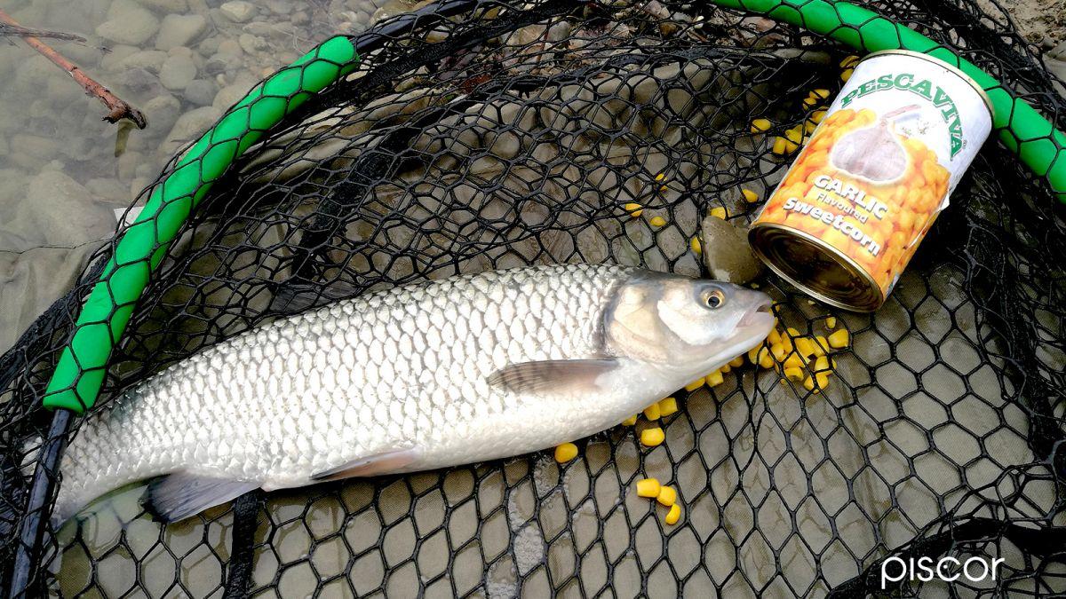 Pesca Inglese con Scorrevole 10