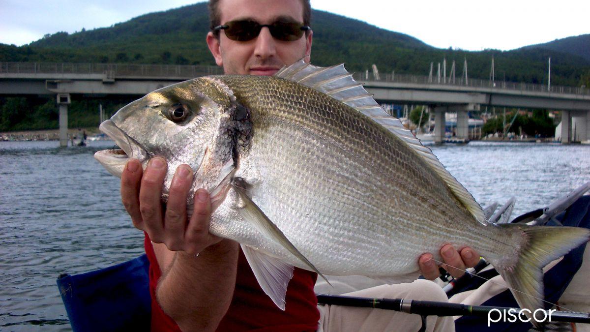 Pesca Orata 4