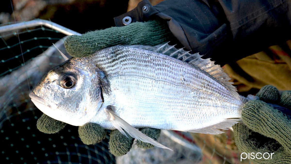 Pesca da Riva 2