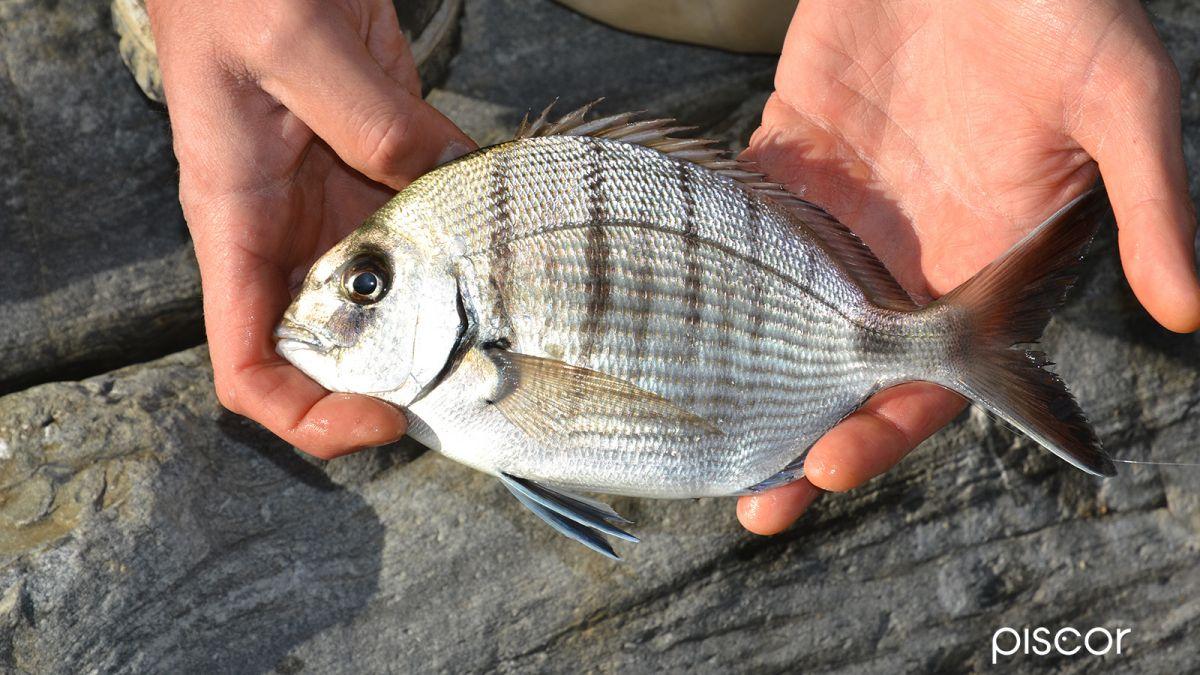 Pesca Scogliera Bolognese 2