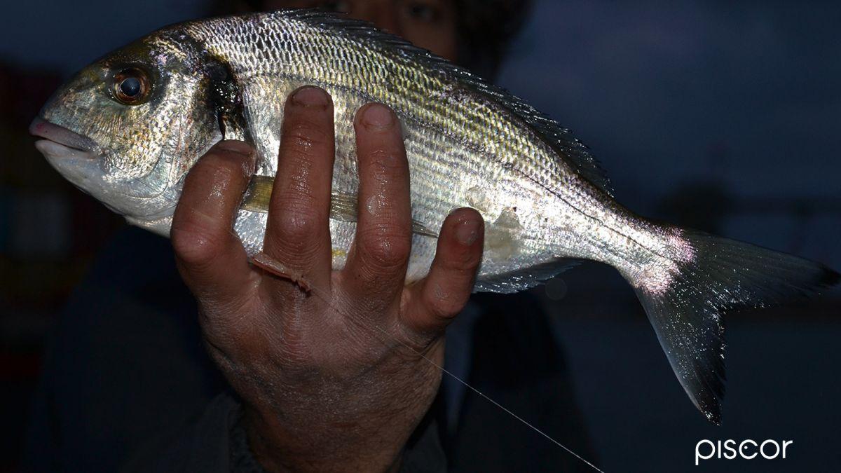 Pesca Scogliera Bolognese 3