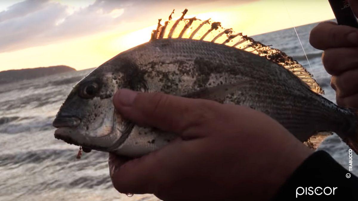Pesca Spigola 3