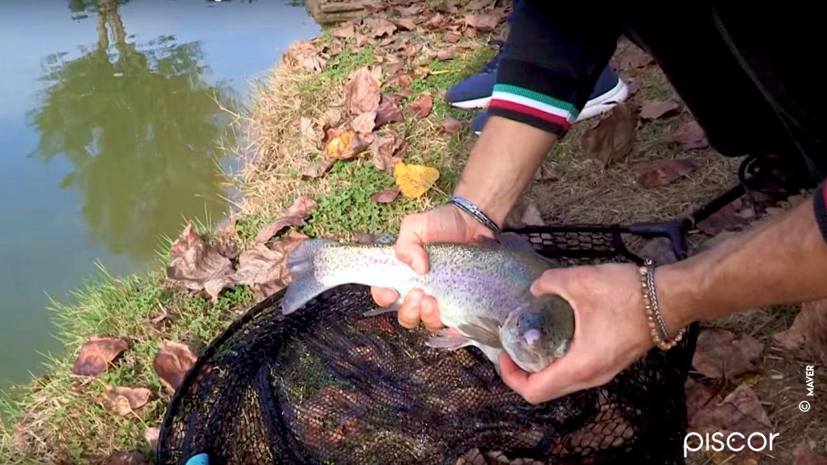 Pesca Trota Lago 2