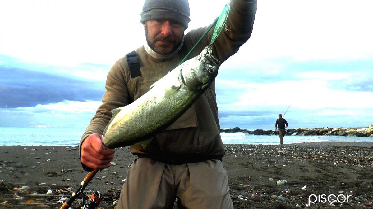 Pesce Serra a Spinning 3