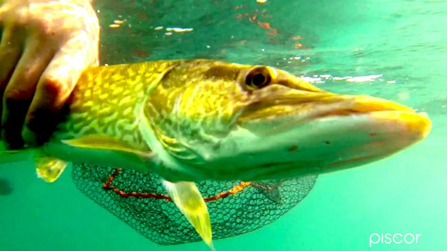 Pike Spinning Fishing 0