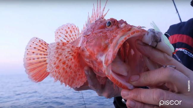 Red Scorpionfish Fishing 1