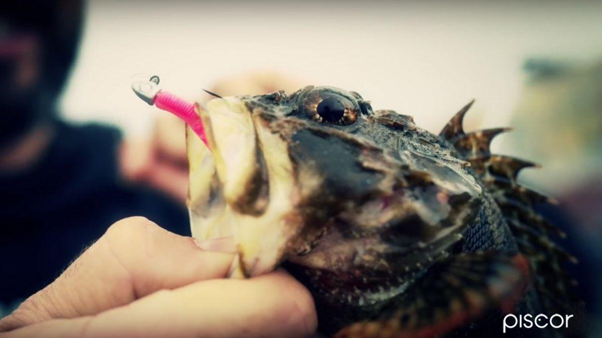 Rockfishing 7