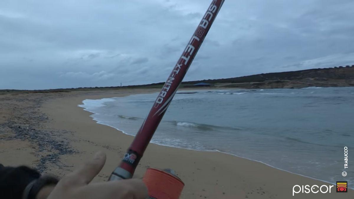 Sars et Oblades en Surfcasting 10
