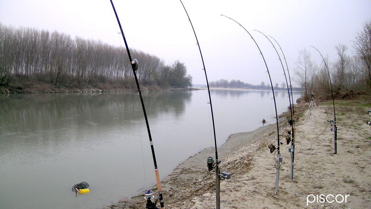 Limited Time Deals New Deals Everyday Pesca Al Siluro Da Riva Off 74 Buy