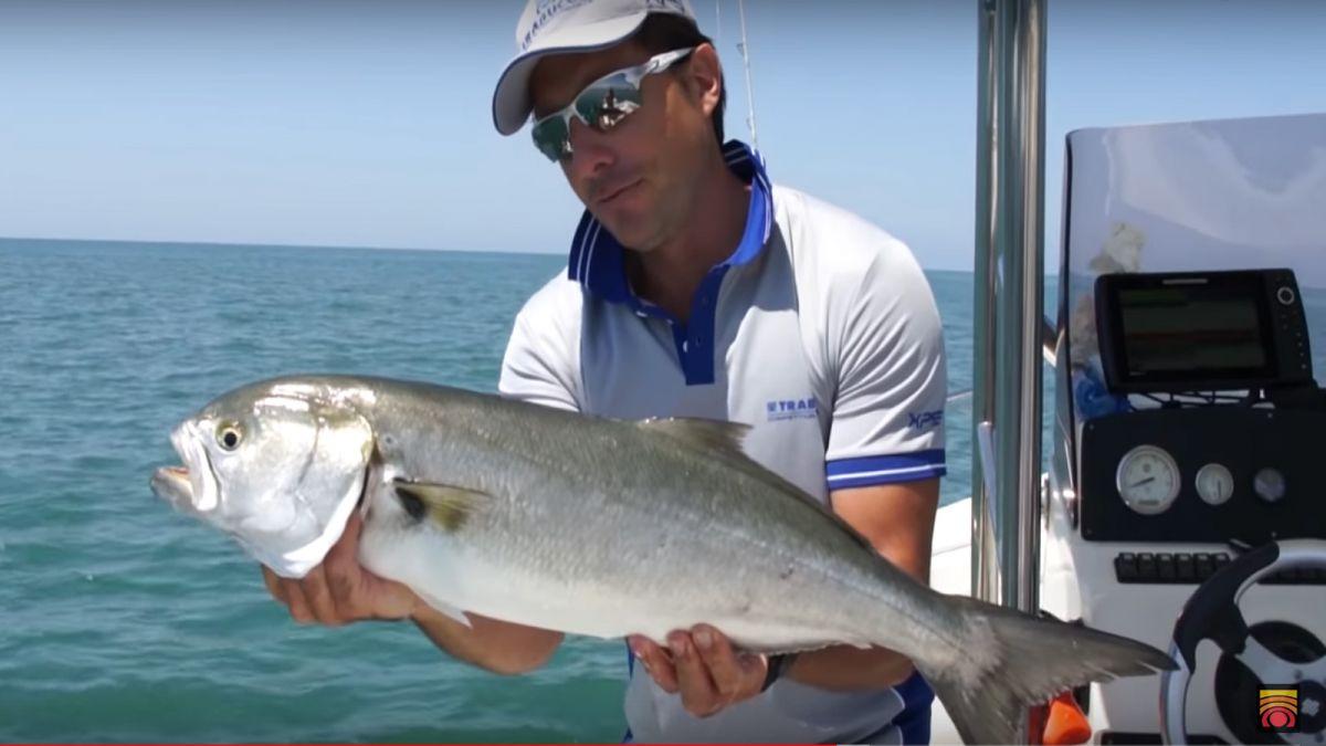 Traina al Pesce Serra 2