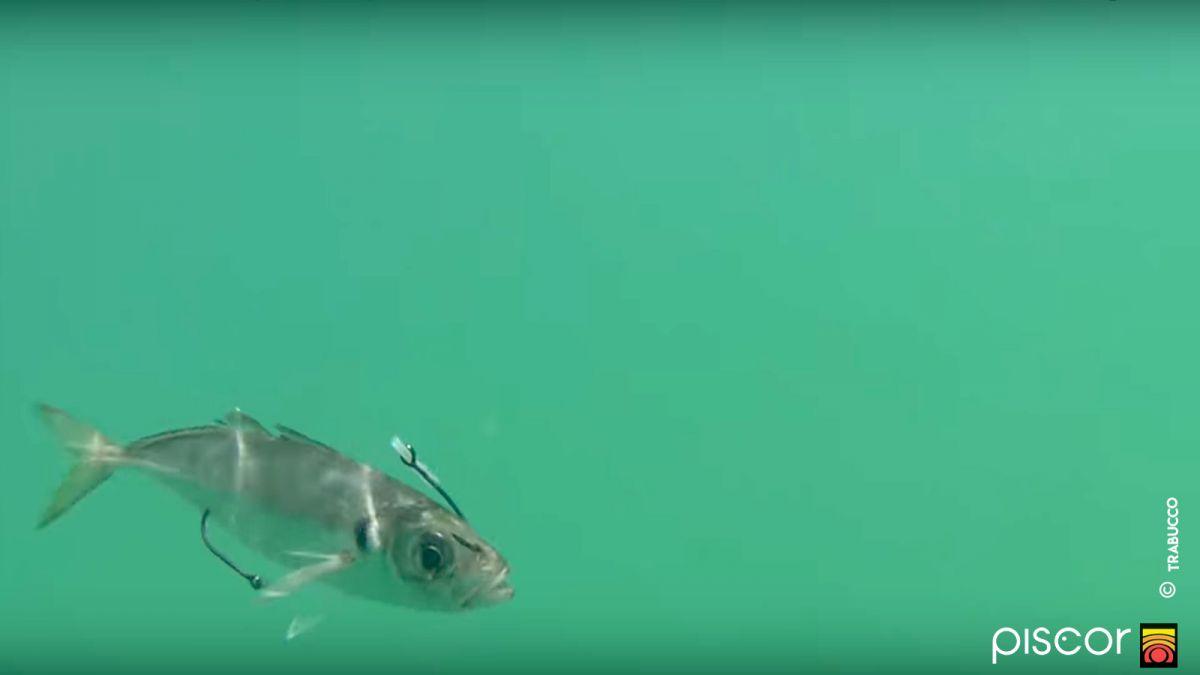 Traina al Pesce Serra 8