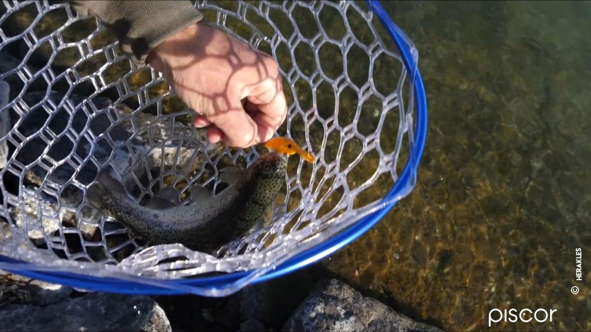 Trota A Bottom Trout Area 3