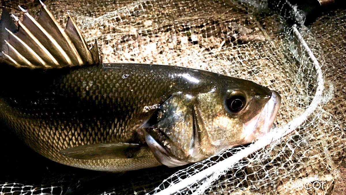 Urban Fishing 6